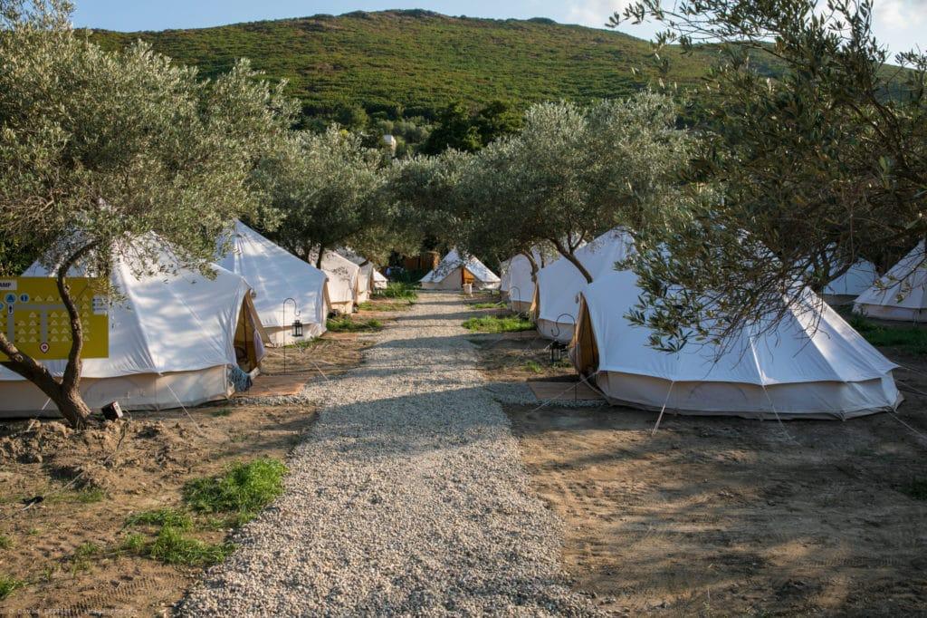 Installation de tentes sous une oliveraie