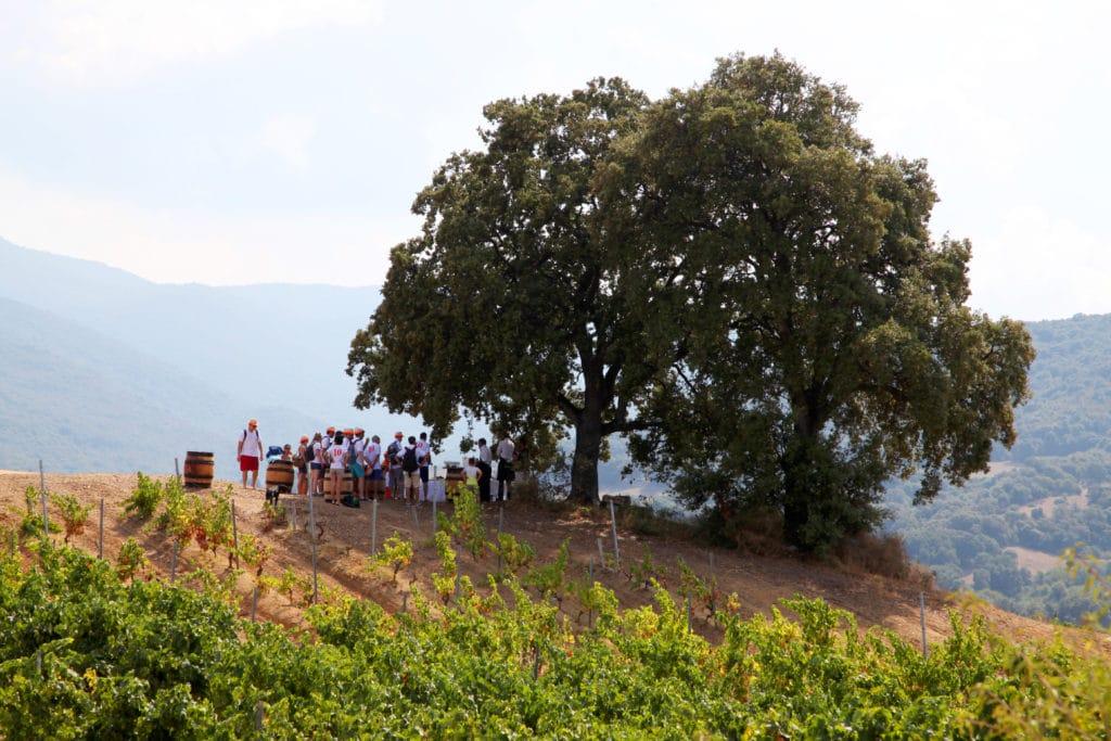 Un groupe en séminaire découvre les vins corse sous un grand arbre centenaire